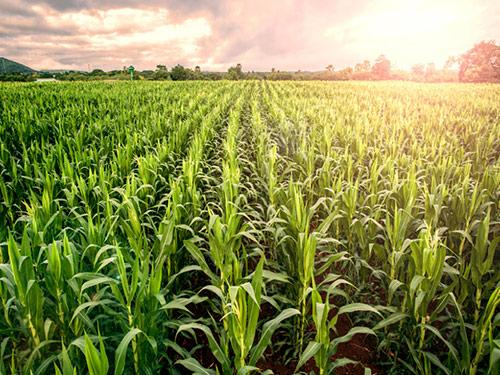 تاثير اعتبارات بانکي بر صادرات غيرنفتي بخش هاي صنعت و کشاورزي در ايران